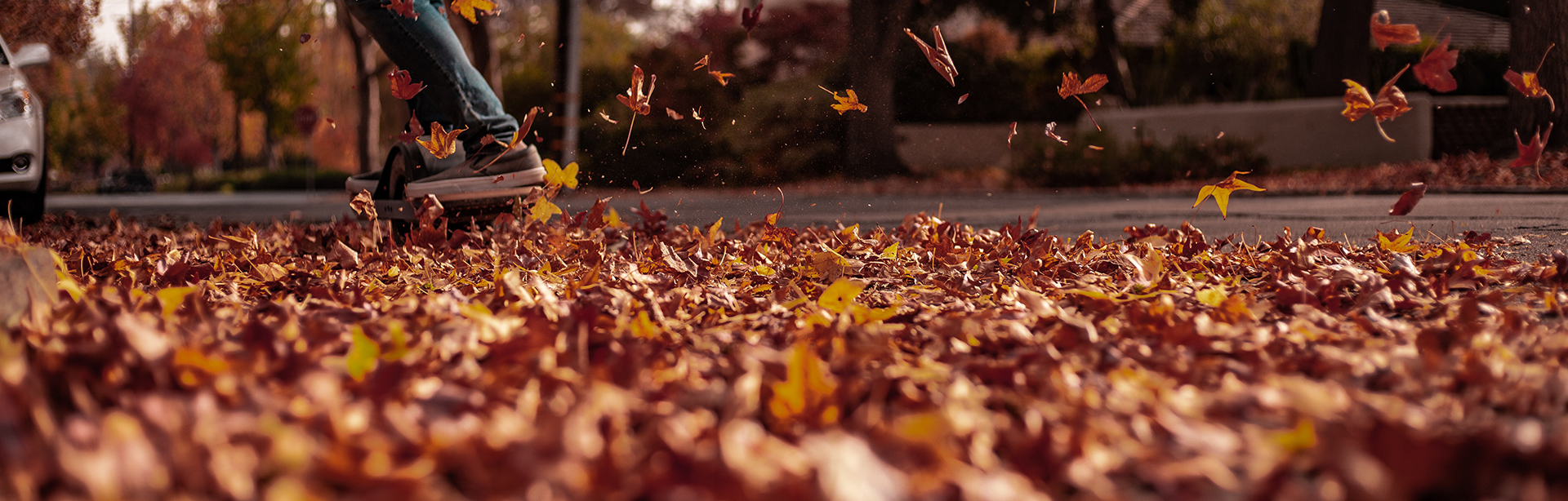 Autumn Leaves - Photo by Stitch Dias from Pexels